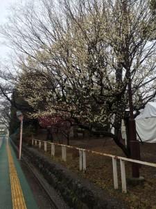 hanegi_park_0049