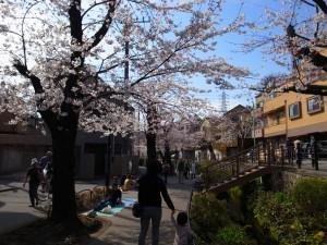 2015_cherry_blossom_0004