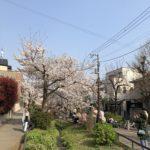 2019年 北沢川緑道の桜