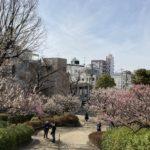 羽根木公園の梅の開花状況(2021/2/27)